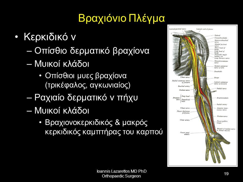 Βραχιόνιο Πλέγμα Κερκιδικό ν –Οπίσθιο δερματικό βραχίονα –Μυικοί κλάδοι Οπίσθιοι μυες βραχίονα (τρικέφαλος, αγκωνιαίος) –Ραχιαίο δερματικό ν πήχυ –Μυικοί κλάδοι Βραχιονοκερκιδικός & μακρός κερκιδικός καμπτήρας του καρπού Ioannis Lazarettos MD PhD Orthopaedic Surgeon 19