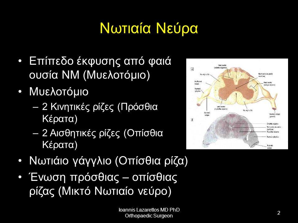Νωτιαία Νεύρα Επίπεδο έκφυσης από φαιά ουσία ΝΜ (Μυελοτόμιο) Μυελοτόμιο –2 Κινητικές ρίζες (Πρόσθια Κέρατα) –2 Αισθητικές ρίζες (Οπίσθια Κέρατα) Νωτιάιο γάγγλιο (Οπίσθια ρίζα) Ένωση πρόσθιας – οπίσθιας ρίζας (Μικτό Νωτιαίο νεύρο) Ioannis Lazarettos MD PhD Orthopaedic Surgeon 2