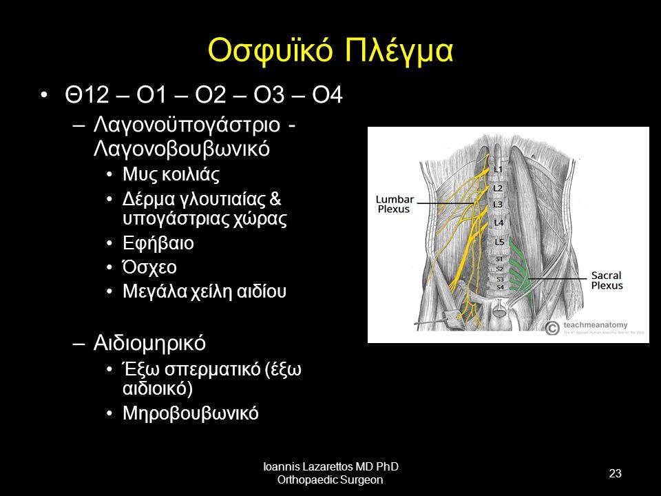 Οσφυϊκό Πλέγμα Θ12 – Ο1 – Ο2 – Ο3 – Ο4 –Λαγονοϋπογάστριο - Λαγονοβουβωνικό Μυς κοιλιάς Δέρμα γλουτιαίας & υπογάστριας χώρας Εφήβαιο Όσχεο Μεγάλα χείλη αιδίου –Αιδιομηρικό Έξω σπερματικό (έξω αιδιοικό) Μηροβουβωνικό Ioannis Lazarettos MD PhD Orthopaedic Surgeon 23
