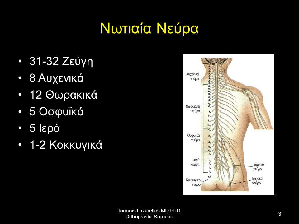 Νωτιαία Νεύρα 31-32 Ζεύγη 8 Αυχενικά 12 Θωρακικά 5 Οσφυϊκά 5 Ιερά 1-2 Κοκκυγικά Ioannis Lazarettos MD PhD Orthopaedic Surgeon 3