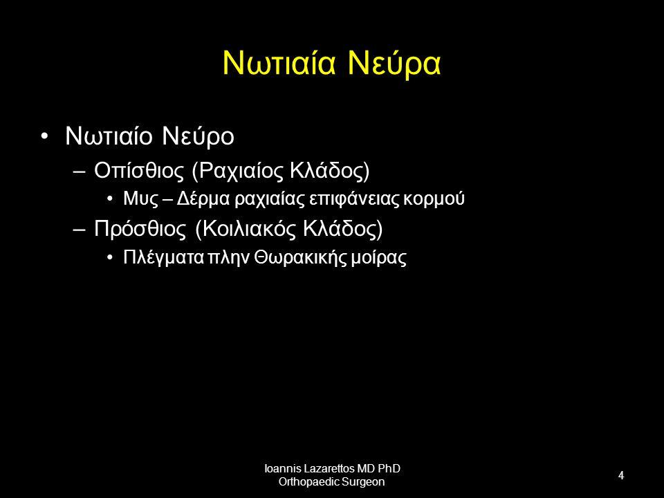 Νωτιαία Νεύρα Νωτιαίο Νεύρο –Οπίσθιος (Ραχιαίος Κλάδος) Μυς – Δέρμα ραχιαίας επιφάνειας κορμού –Πρόσθιος (Κοιλιακός Κλάδος) Πλέγματα πλην Θωρακικής μοίρας Ioannis Lazarettos MD PhD Orthopaedic Surgeon 4