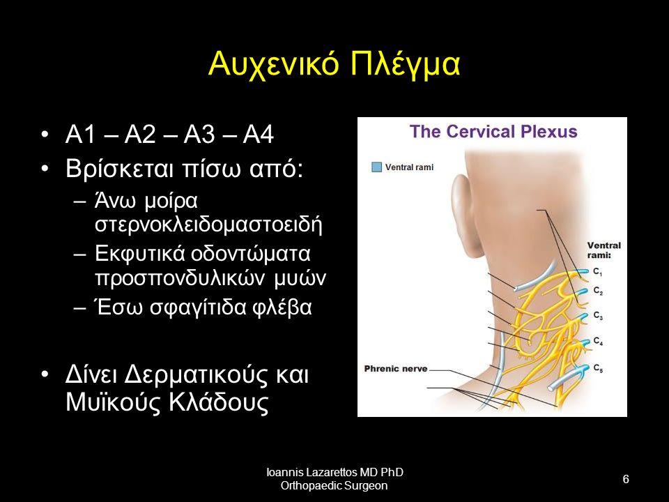 Αυχενικό Πλέγμα Α1 – Α2 – Α3 – Α4 Βρίσκεται πίσω από: –Άνω μοίρα στερνοκλειδομαστοειδή –Εκφυτικά οδοντώματα προσπονδυλικών μυών –Έσω σφαγίτιδα φλέβα Δίνει Δερματικούς και Μυϊκούς Κλάδους Ioannis Lazarettos MD PhD Orthopaedic Surgeon 6