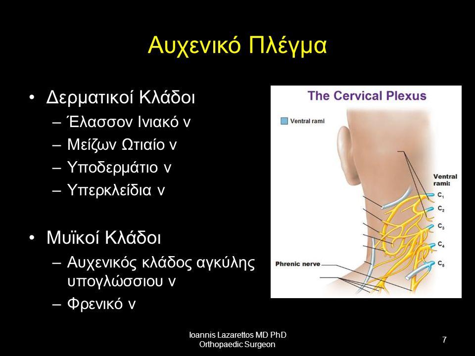 Αυχενικό Πλέγμα Δερματικοί Κλάδοι –Έλασσον Ινιακό ν –Μείζων Ωτιαίο ν –Υποδερμάτιο ν –Υπερκλείδια ν Μυϊκοί Κλάδοι –Αυχενικός κλάδος αγκύλης υπογλώσσιου ν –Φρενικό ν Ioannis Lazarettos MD PhD Orthopaedic Surgeon 7