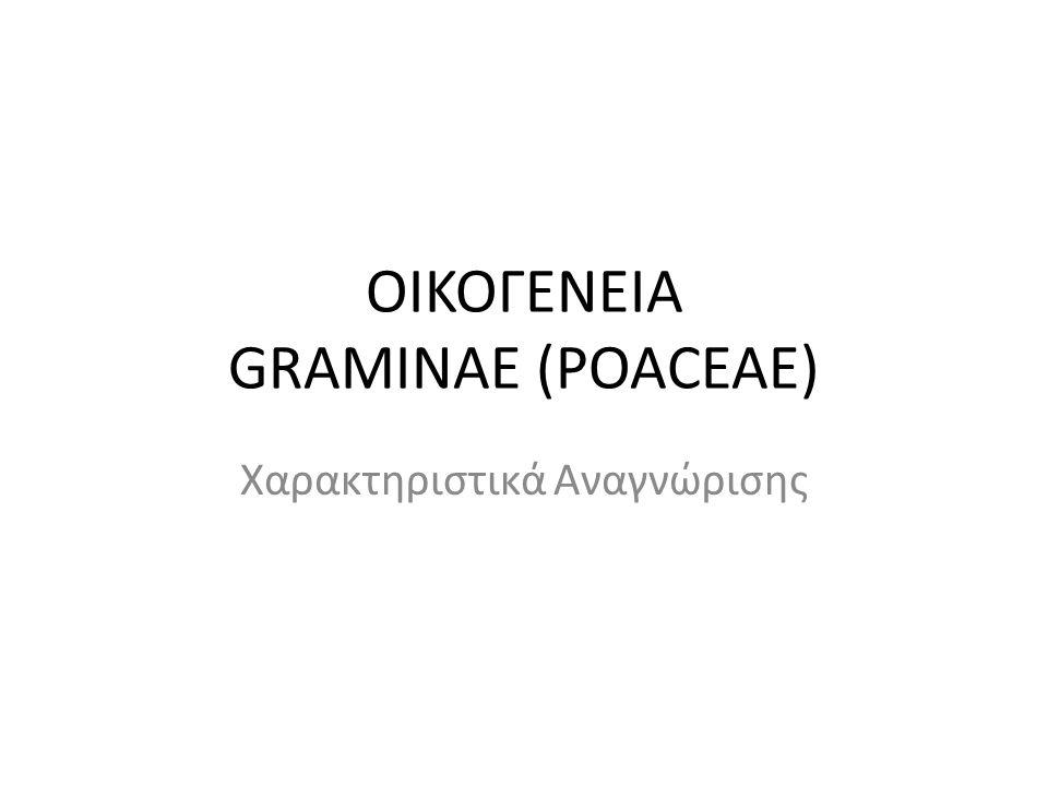 ΟΙΚΟΓΕΝΕΙΑ GRAMINAE (POACEAE) Χαρακτηριστικά Αναγνώρισης