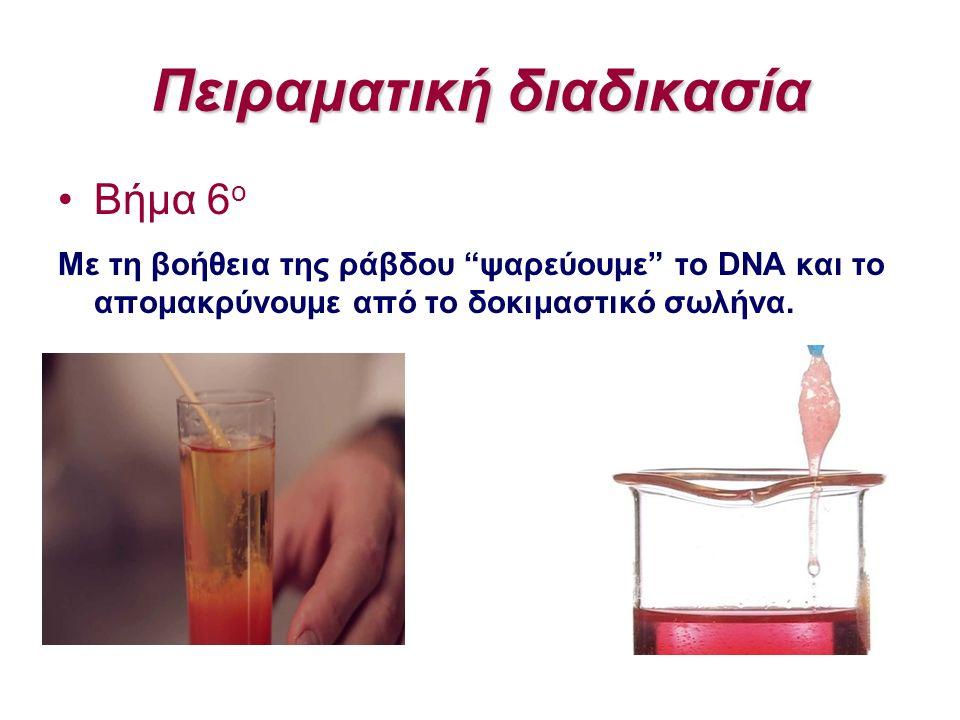 """Πειραματική διαδικασία Βήμα 6 ο Με τη βοήθεια της ράβδου """"ψαρεύουμε"""" το DNA και το απομακρύνουμε από το δοκιμαστικό σωλήνα."""