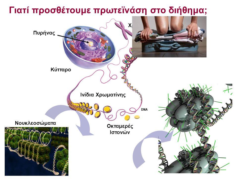 Πυρήνας Κύτταρο Ινίδια Χρωματίνης Χρωμόσωμα Γιατί προσθέτουμε πρωτεïνάση στο διήθημα; Οκταμερές Ιστονών Νουκλεοσώματα