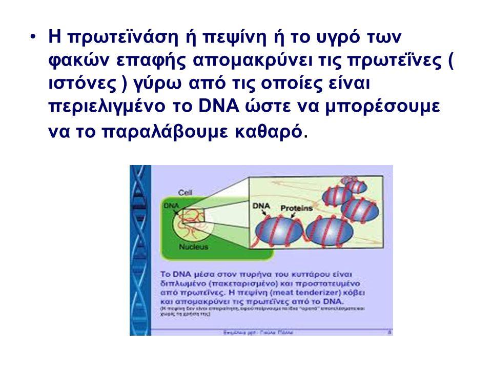 Η πρωτεϊνάση ή πεψίνη ή το υγρό των φακών επαφής απομακρύνει τις πρωτεΐνες ( ιστόνες ) γύρω από τις οποίες είναι περιελιγμένο το DNA ώστε να μπορέσουμ