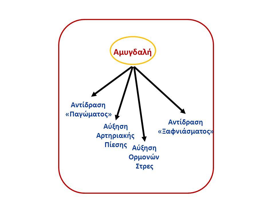 Αμυγδαλή Αντίδραση «Παγώματος» Αύξηση Αρτηριακής Πίεσης Αύξηση Ορμονών Στρες Αντίδραση «Ξαφνιάσματος»