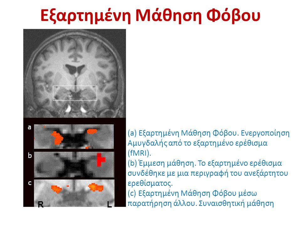 RL Εξαρτημένη Μάθηση Φόβου (a) Εξαρτημένη Μάθηση Φόβου. Ενεργοποίηση Αμυγδαλής από το εξαρτημένο ερέθισμα (fMRI). (b) Έμμεση μάθηση. Το εξαρτημένο ερέ