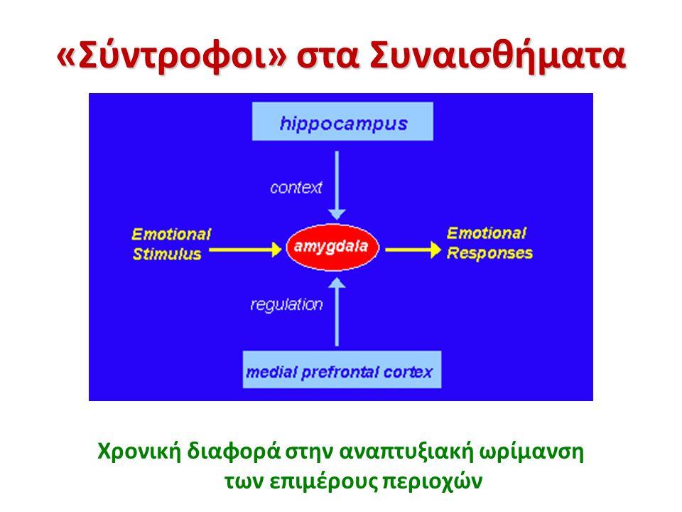«Σύντροφοι» στα Συναισθήματα Χρονική διαφορά στην αναπτυξιακή ωρίμανση των επιμέρους περιοχών