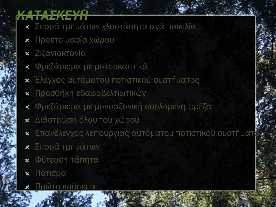 Acacia farnesiana – Leguminosae - Γαζία