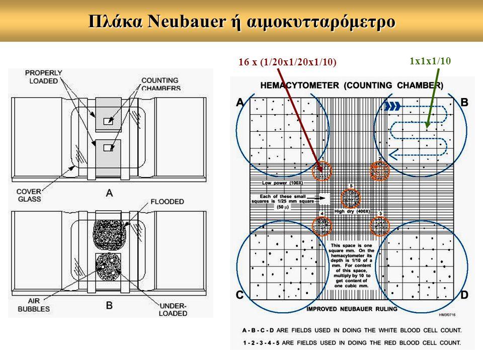 Πλάκα Neubauer ή αιμοκυτταρόμετρο 16 x (1/20x1/20x1/10) 1x1x1/10