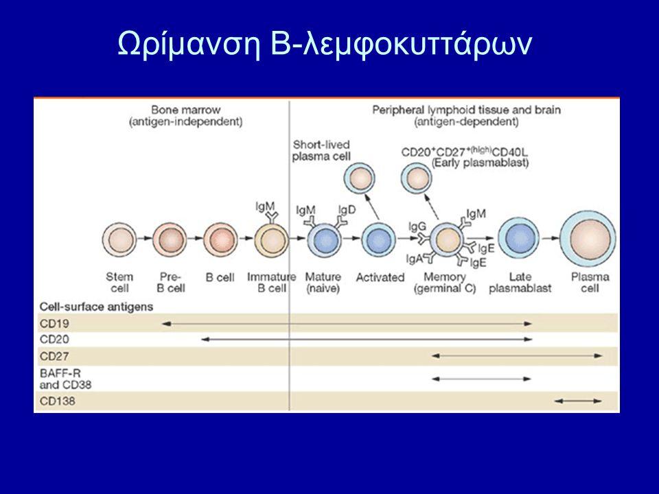 Ωρίμανση Β-λεμφοκυττάρων