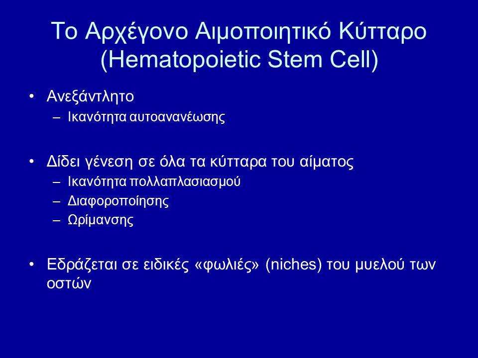 Το Αρχέγονο Αιμοποιητικό Κύτταρο (Hematopoietic Stem Cell) Ανεξάντλητο –Ικανότητα αυτοανανέωσης Δίδει γένεση σε όλα τα κύτταρα του αίματος –Ικανότητα