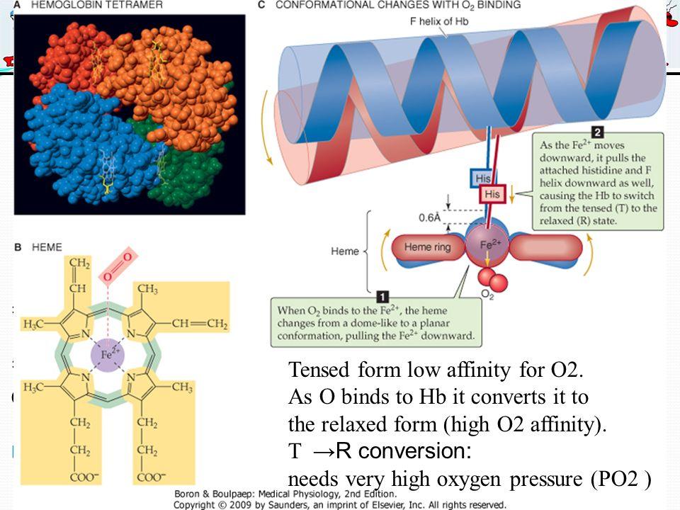 Μηχανισμοί μεταφοράς * 4 μόρια αίμης = * 4 μόρια Οξυγόνου *Οξυγονωμένη αιμοσφαιρίνη Ερυθρή (αρτηριακή) * Μη Οξυγονωμένη αιμοσφαιρίνη Μπλε (φλεβική κυκλοφορία) Αιμοσφαιρίνη Tensed form low affinity for O2.