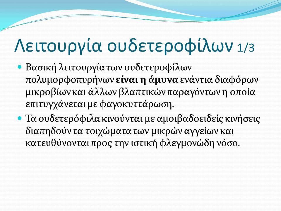 Λειτουργία ουδετεροφίλων 1/3 Βασική λειτουργία των ουδετεροφίλων πολυμορφοπυρήνων είναι η άμυνα ενάντια διαφόρων μικροβίων και άλλων βλαπτικών παραγόντων η οποία επιτυγχάνεται με φαγοκυττάρωση.