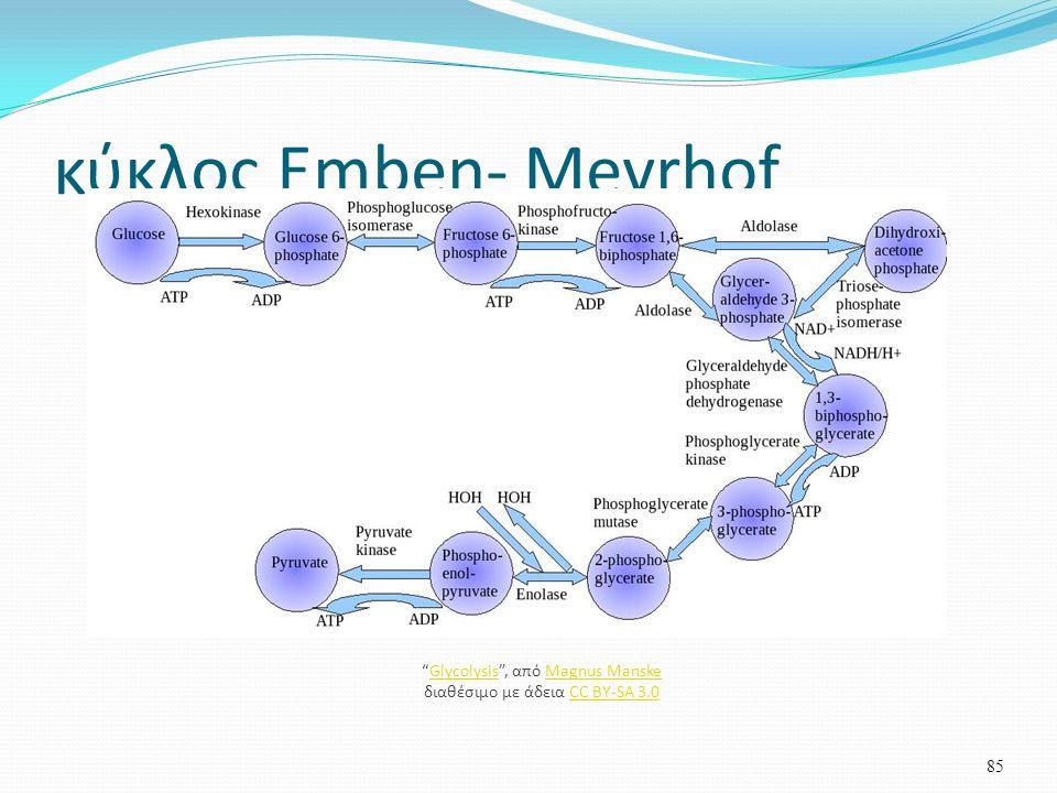 κύκλος Emben- Meyrhof 85 Glycolysis , από Magnus Manske διαθέσιμο με άδεια CC BY-SA 3.0GlycolysisMagnus ManskeCC BY-SA 3.0