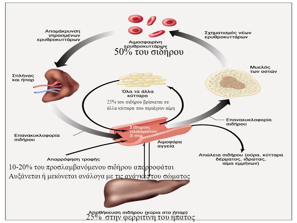 10-20% του προσλαμβανόμενου σιδήρου απορροφάται Αυξάνεται ή μειώνεται ανάλογα με τις ανάγκες του σώματος 25% στην φερριτίνη του ήπατος 50% του σιδήρου 25% του σιδήρου βρίσκεται σε άλλα κύτταρα που περιέχουν αίμη