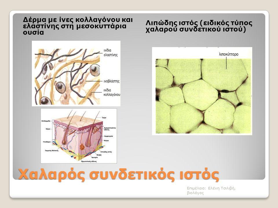 Χαλαρός συνδετικός ιστός Δέρμα με ίνες κολλαγόνου και ελαστίνης στη μεσοκυττάρια ουσία Λιπώδης ιστός (ειδικός τύπος χαλαρού συνδετικού ιστού) Επιμέλεια: Ελένη Τσιλιβή, βιολόγος