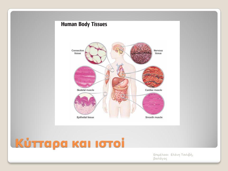 Κύτταρα και ιστοί Επιμέλεια: Ελένη Τσιλιβή, βιολόγος