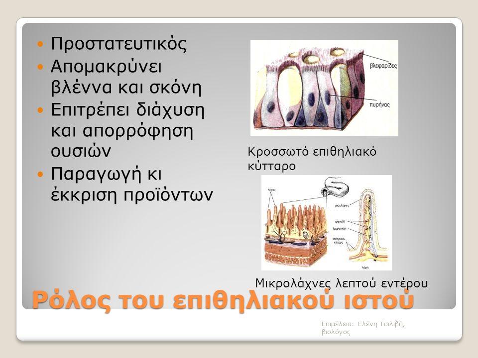 Ρόλος του επιθηλιακού ιστού Προστατευτικός Απομακρύνει βλέννα και σκόνη Επιτρέπει διάχυση και απορρόφηση ουσιών Παραγωγή κι έκκριση προϊόντων Επιμέλεια: Ελένη Τσιλιβή, βιολόγος Κροσσωτό επιθηλιακό κύτταρο Μικρολάχνες λεπτού εντέρου