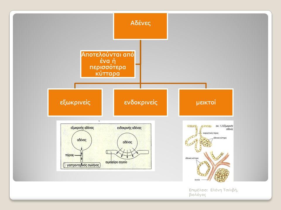 Αδένες εξωκρινείςενδοκρινείςμεικτοί Αποτελούνται από ένα ή περισσότερα κύτταρα Επιμέλεια: Ελένη Τσιλιβή, βιολόγος