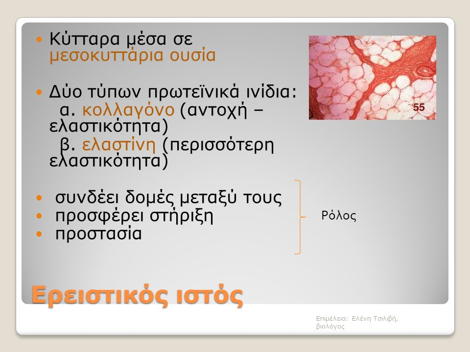 Ερειστικός ιστός συνδετικόςχαλαρόςπυκνόςχόνδρινοςοστίτης Επιμέλεια: Ελένη Τσιλιβή, βιολόγος