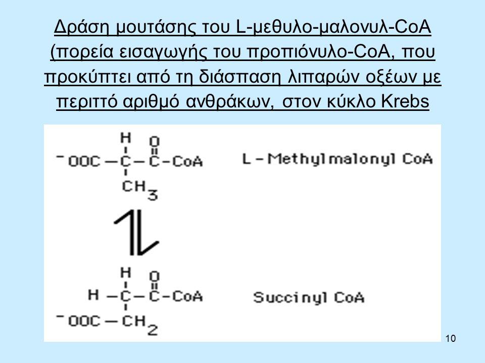 10 Δράση μουτάσης του L-μεθυλο-μαλονυλ-CoA (πορεία εισαγωγής του προπιόνυλο-CoA, που προκύπτει από τη διάσπαση λιπαρών οξέων με περιττό αριθμό ανθράκων, στον κύκλο Krebs
