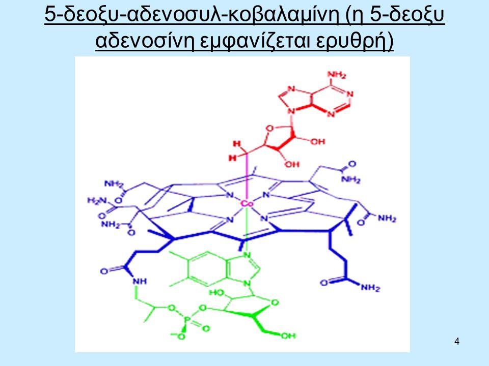 25 Μεγαλοβλαστική αναιμία Μειωμένη δραστηριότητα της συνθετάση μεθειονίνης, σε ανεπάρκεια B12, εμποδίζει την αναγέννηση του τετραϋδροφολικού (THF) και το παγιδεύει σε μια μορφή που δεν μπορεί να χρησιμοποιηθεί, με αποτέλεσμα να μην είναι διαθέσιμο στη σύνθεση DNA (3).