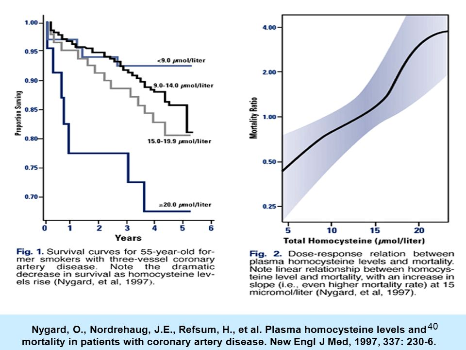 40 Nygard, O., Nordrehaug, J.E., Refsum, H., et al. Plasma homocysteine levels and mortality in patients with coronary artery disease. New Engl J Med,