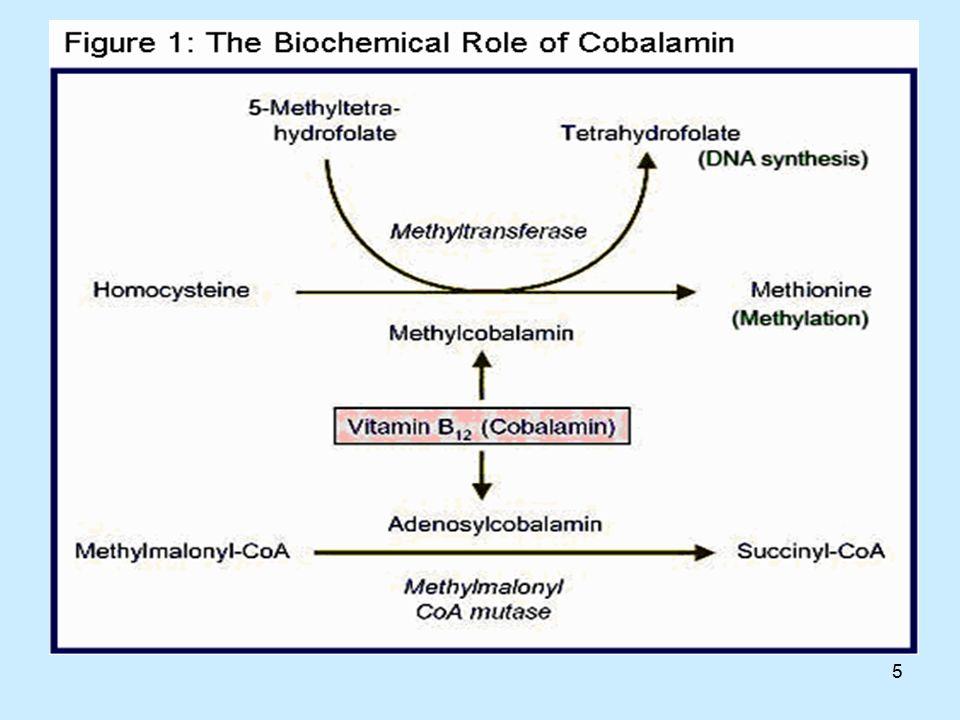 6 Συμπαράγοντας για τη συνθετάση της μεθειονίνης Η μεθυλοκοβαλαμίνη απαιτείται για τη λειτουργία του ενζύμου, το οποίο εξαρτάται από το φυλλικό οξέος για τη σύνθεση (και ανασύνθεση) του αμινοξέος, μεθειονίνη, από ομοκυστεΐνη.