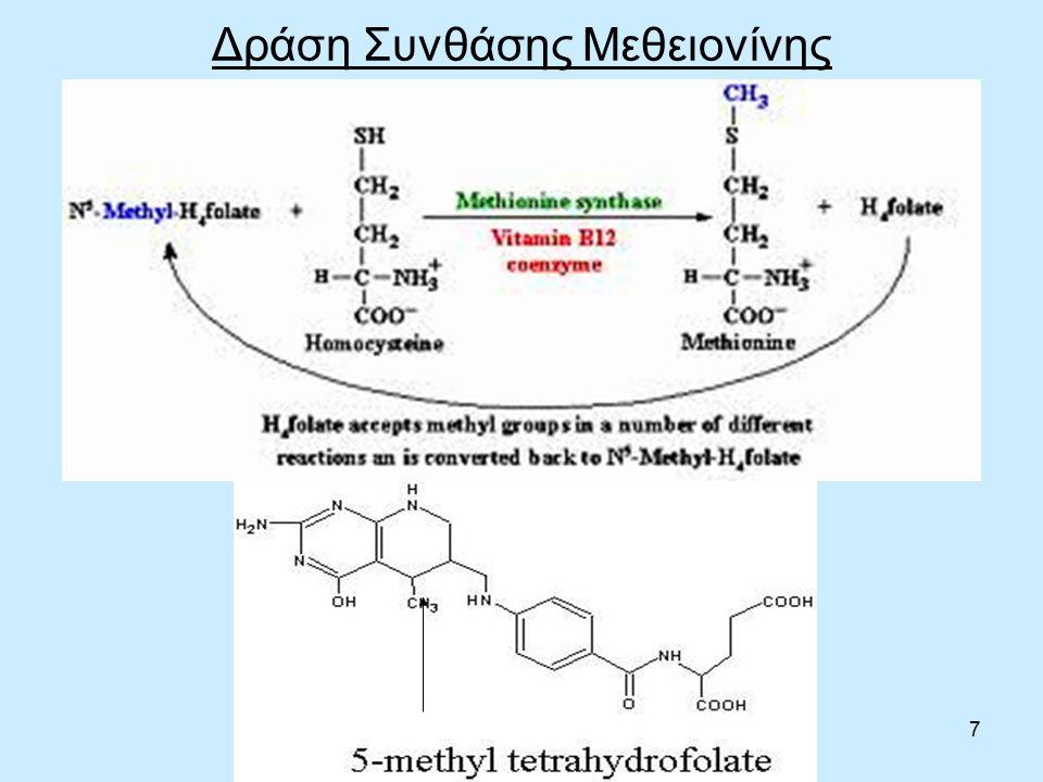 7 Δράση Συνθάσης Μεθειονίνης