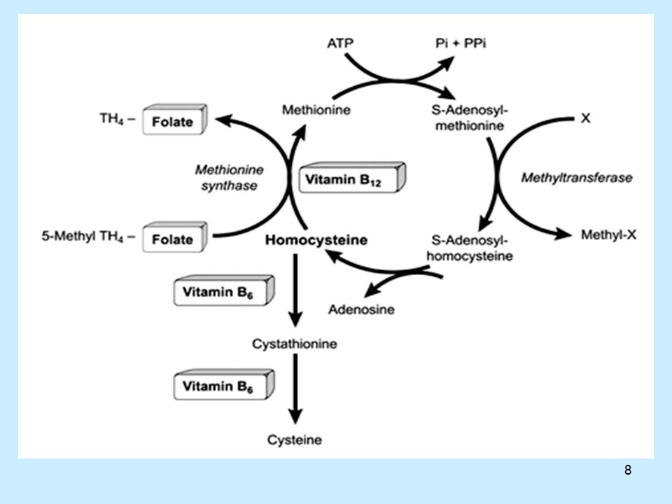 39 Ομοκυστεΐνη και καρδιαγγειακά νοσήματα Ακόμη και μετρίως αυξημένα επίπεδα ομοκυστεΐνης στο αίμα αυξάνουν τον κίνδυνο για καρδιαγγειακά (13).