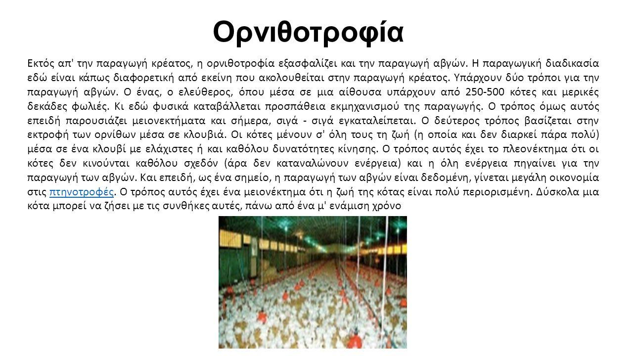 Ορνιθοτροφία Εκτός απ την παραγωγή κρέατος, η ορνιθοτροφία εξασφαλίζει και την παραγωγή αβγών.