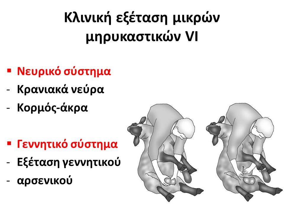  Νευρικό σύστημα -Κρανιακά νεύρα -Κορμός-άκρα  Γεννητικό σύστημα -Εξέταση γεννητικού -αρσενικού Κλινική εξέταση μικρών μηρυκαστικών VΙ