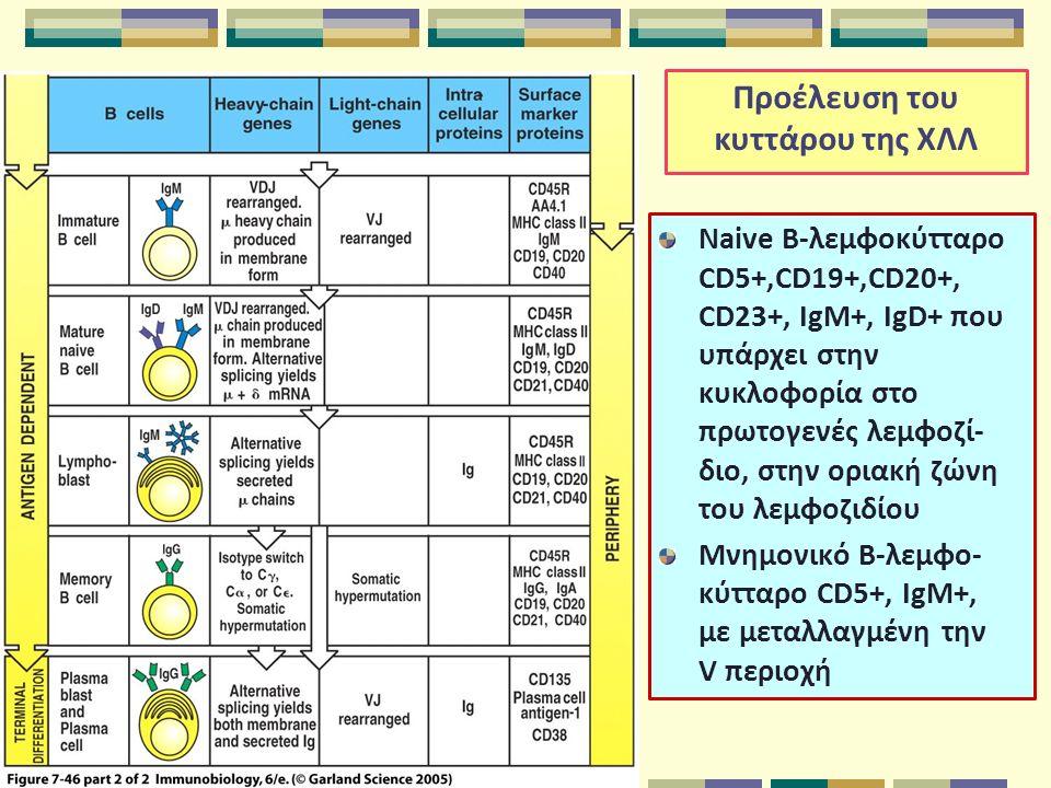 Προέλευση του κυττάρου της ΧΛΛ Naive B-λεμφοκύτταρο CD5+,CD19+,CD20+, CD23+, IgM+, IgD+ που υπάρχει στην κυκλοφορία στο πρωτογενές λεμφοζί- διο, στην οριακή ζώνη του λεμφοζιδίου Μνημονικό B-λεμφο- κύτταρο CD5+, IgM+, με μεταλλαγμένη την V περιοχή