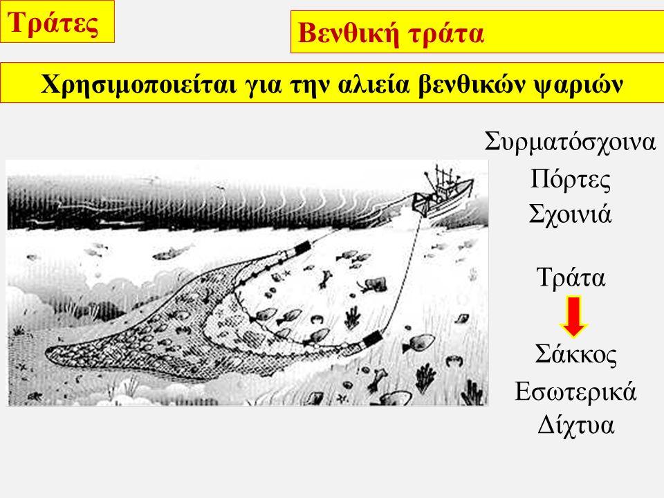 Τράτες Βενθική τράτα Στρατηγικές αλιείας Δεν είναι επιλεκτικό εργαλείο Χρησιμοποιείται σε ομαλούς βυθούς Μέχρι 1000 m βάθος Η διάρκεια σύρσης επιλέγεται από τον καπετάνιο Κατά τη διάρκεια της σύρσης έχει μήκος 50-60 m Ο σάκκος της τράτας φθάνει τα 5 m μήκος Σε πετρώδες υπόστρωμα προσαρμόζονται στο άνοιγμα του σάκκου μεταλλικές μπάλες