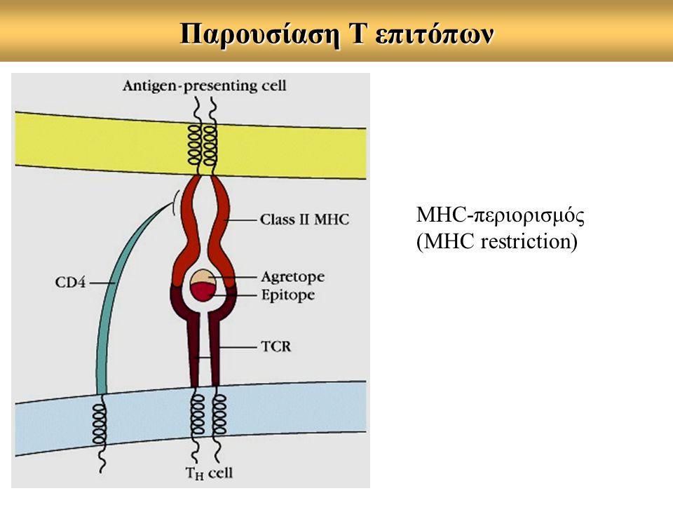 Παρουσίαση Τ επιτόπων MHC-περιορισμός (MHC restriction)