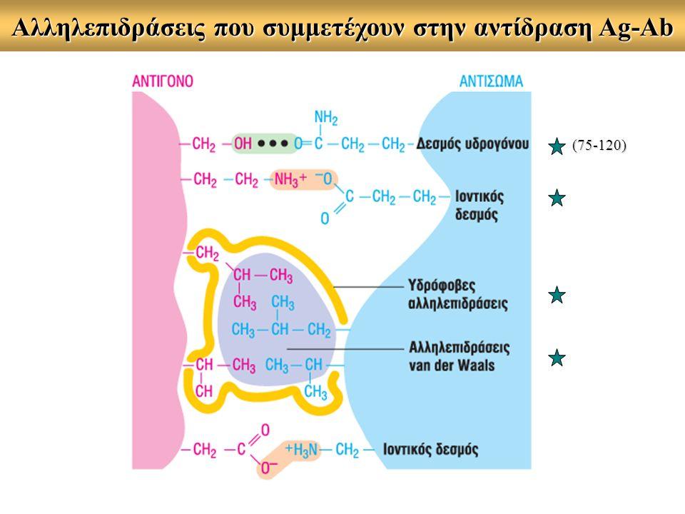Αλληλεπιδράσεις που συμμετέχουν στην αντίδραση Ag-Ab (75-120)