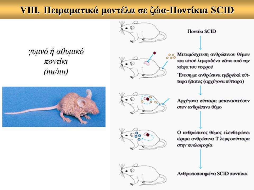 VIII. Πειραματικά μοντέλα σε ζώα-Ποντίκια SCID γυμνό ή αθυμικό ποντίκι (nu/nu)