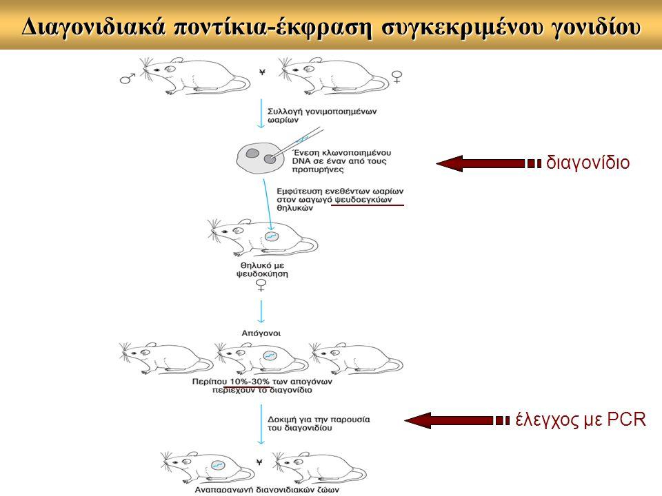 Διαγονιδιακά ποντίκια-έκφραση συγκεκριμένου γονιδίου διαγονίδιο έλεγχος με PCR
