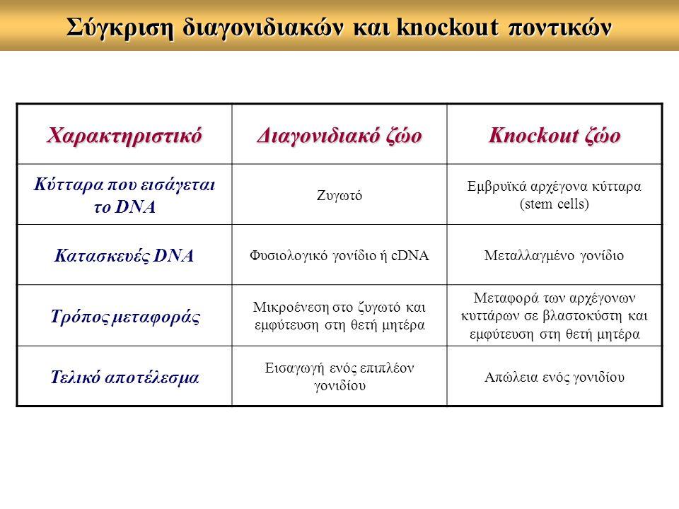 Σύγκριση διαγονιδιακών και knockout ποντικών Χαρακτηριστικό Διαγονιδιακό ζώο Knockout ζώο Κύτταρα που εισάγεται το DNA Ζυγωτό Εμβρυϊκά αρχέγονα κύτταρα (stem cells) Κατασκευές DNA Φυσιολογικό γονίδιο ή cDNAΜεταλλαγμένο γονίδιο Τρόπος μεταφοράς Μικροένεση στο ζυγωτό και εμφύτευση στη θετή μητέρα Μεταφορά των αρχέγονων κυττάρων σε βλαστοκύστη και εμφύτευση στη θετή μητέρα Τελικό αποτέλεσμα Εισαγωγή ενός επιπλέον γονιδίου Απώλεια ενός γονιδίου