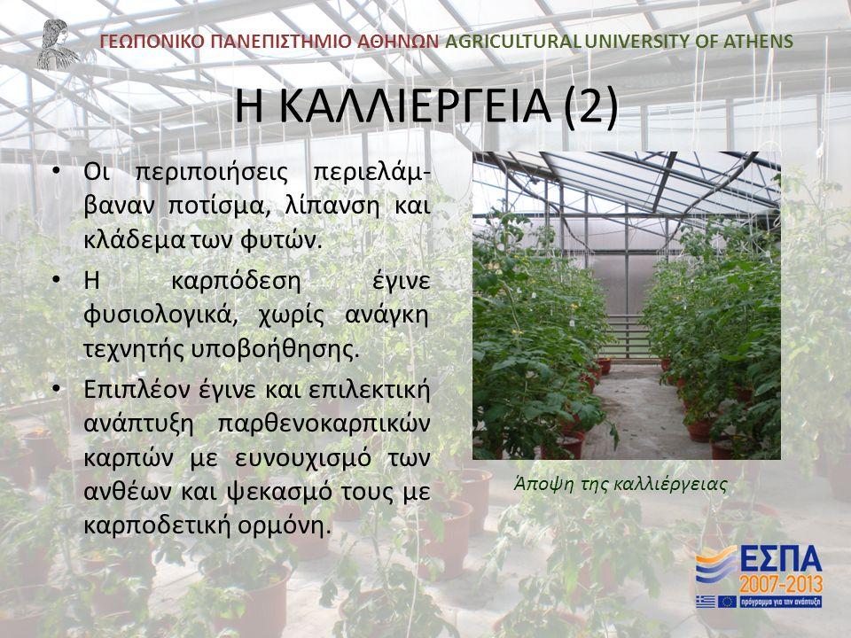 ΓΕΩΠΟΝΙΚΟ ΠΑΝΕΠΙΣΤΗΜΙΟ ΑΘΗΝΩΝ AGRICULTURAL UNIVERSITY OF ATHENS Η ΚΑΛΛΙΕΡΓΕΙΑ (2) Οι περιποιήσεις περιελάμ- βαναν ποτίσμα, λίπανση και κλάδεμα των φυτών.