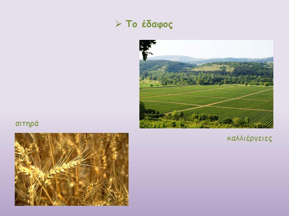  Το έδαφος σιτηρά καλλιέργειες