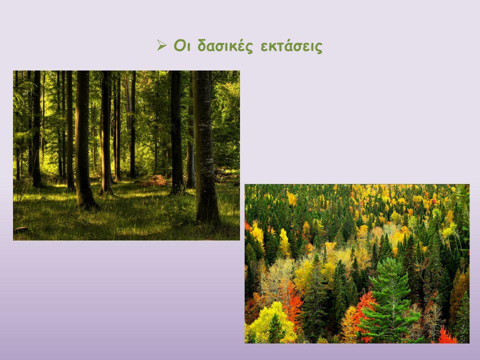  Οι δασικές εκτάσεις