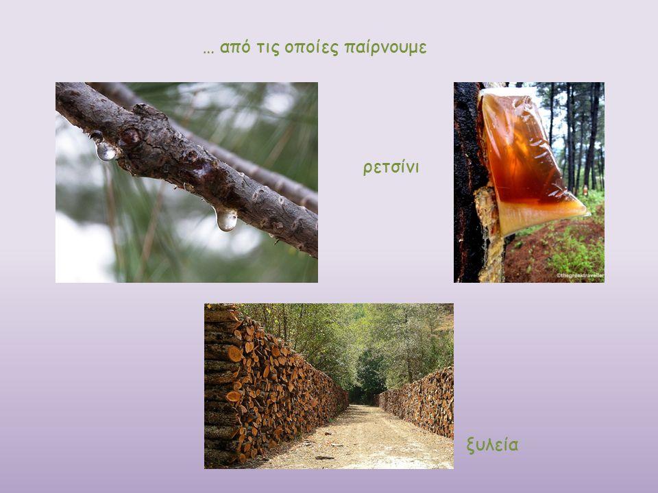 ξυλεία ρετσίνι … από τις οποίες παίρνουμε