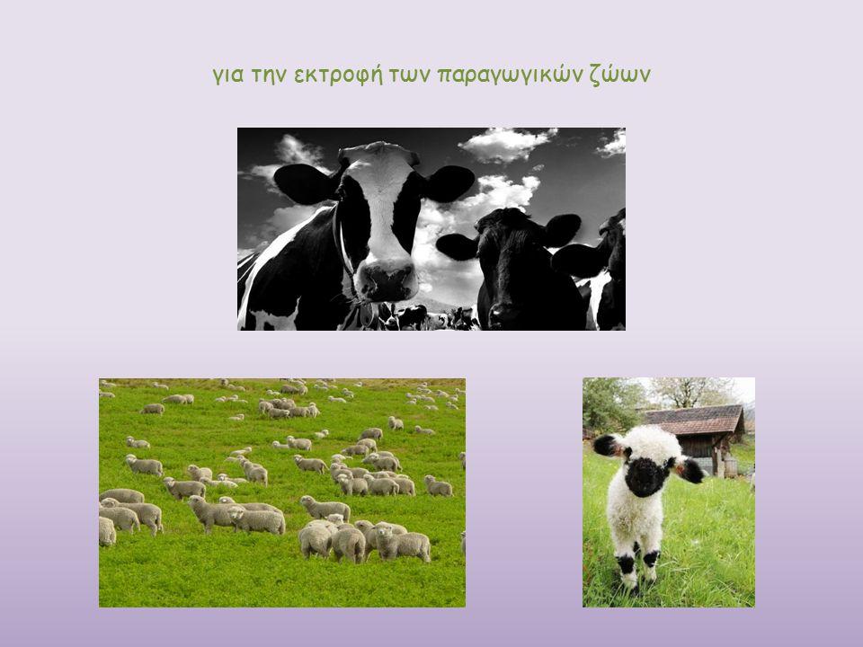 για την εκτροφή των παραγωγικών ζώων
