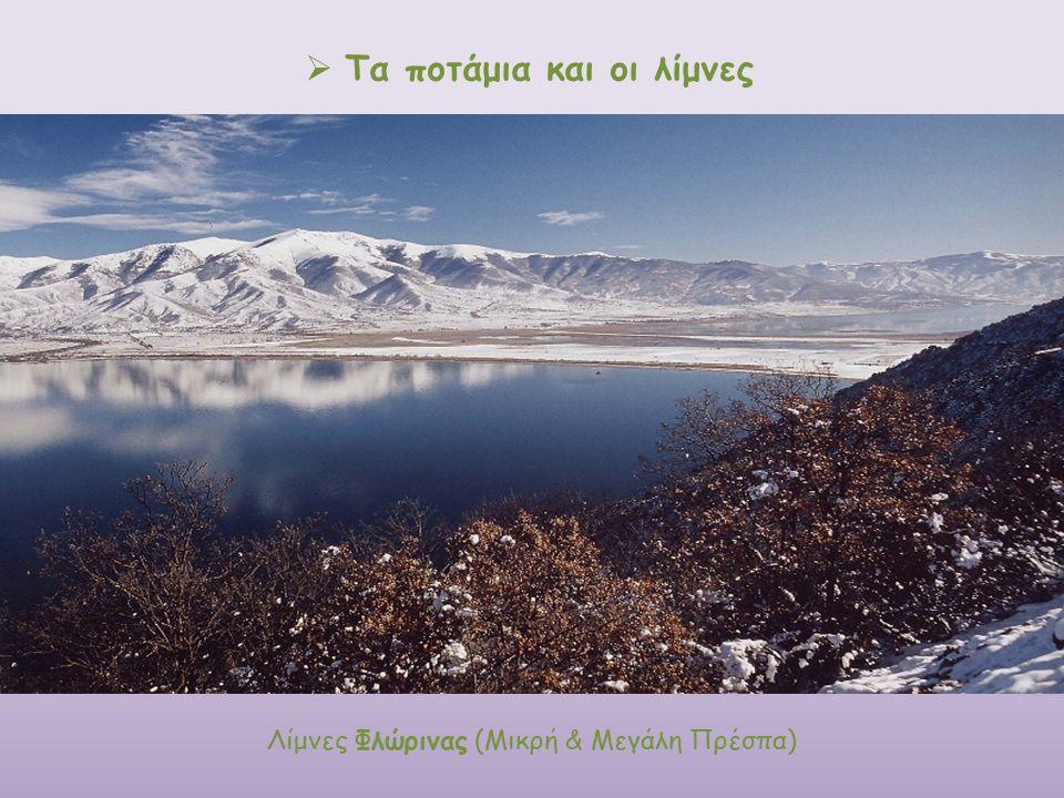  Τα ποτάμια και οι λίμνες o ο άνθρακας Λίμνες Φλώρινας (Μικρή & Μεγάλη Πρέσπα)