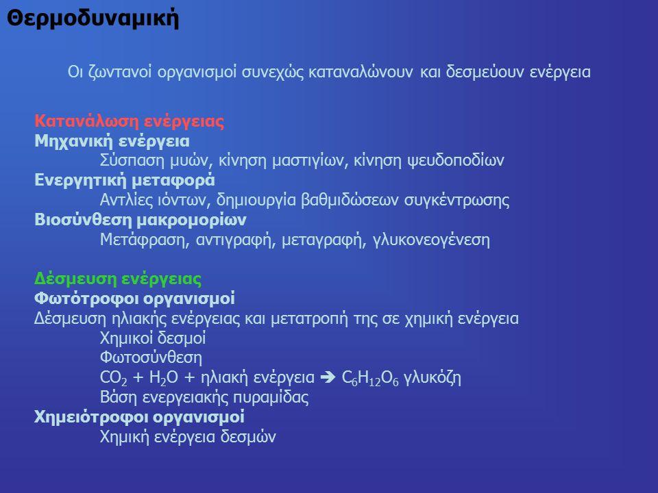 Θερμοδυναμική Οι ζωντανοί οργανισμοί συνεχώς καταναλώνουν και δεσμεύουν ενέργεια Κατανάλωση ενέργειας Μηχανική ενέργεια Σύσπαση μυών, κίνηση μαστιγίων, κίνηση ψευδοποδίων Ενεργητική μεταφορά Αντλίες ιόντων, δημιουργία βαθμιδώσεων συγκέντρωσης Βιοσύνθεση μακρομορίων Μετάφραση, αντιγραφή, μεταγραφή, γλυκονεογένεση Δέσμευση ενέργειας Φωτότροφοι οργανισμοί Δέσμευση ηλιακής ενέργειας και μετατροπή της σε χημική ενέργεια Χημικοί δεσμοί Φωτοσύνθεση CO 2 + H 2 O + ηλιακή ενέργεια  C 6 Η 12 Ο 6 γλυκόζη Βάση ενεργειακής πυραμίδας Χημειότροφοι οργανισμοί Χημική ενέργεια δεσμών