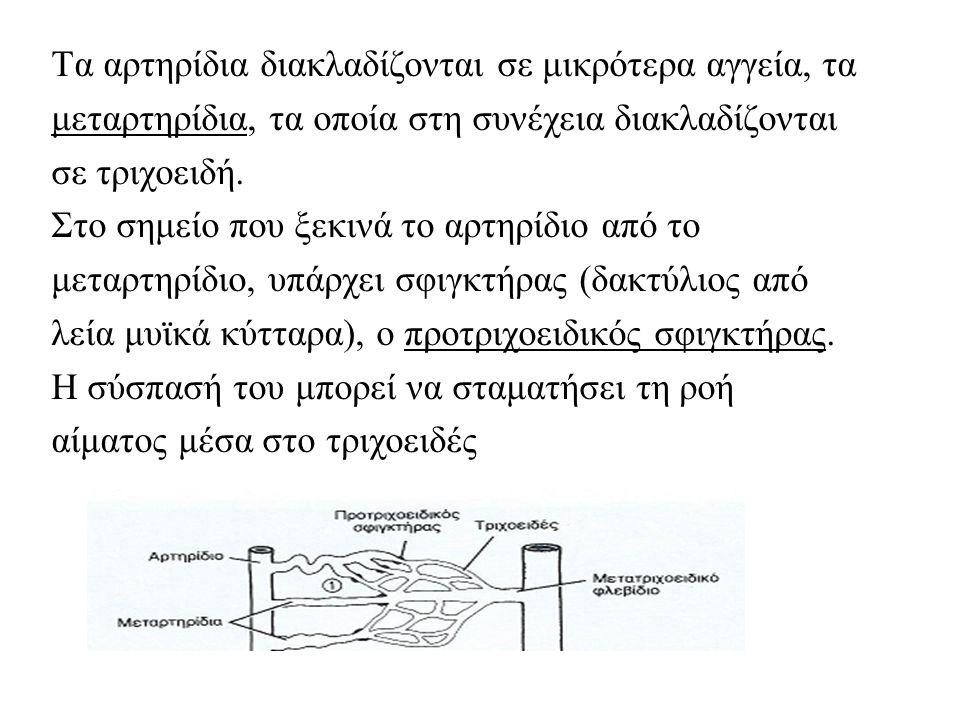 Τα αρτηρίδια διακλαδίζονται σε μικρότερα αγγεία, τα μεταρτηρίδια, τα οποία στη συνέχεια διακλαδίζονται σε τριχοειδή.